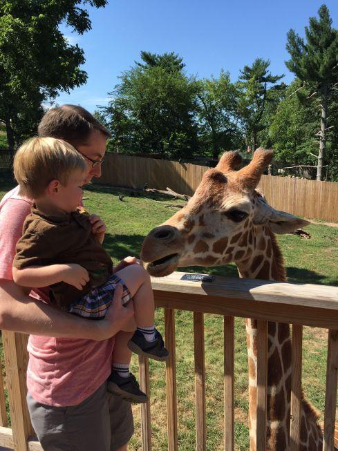FeedingGiraffes