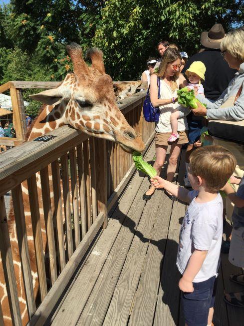 FeedingGiraffes2