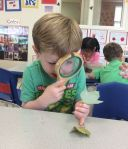 Checking out the veins on the leaves they found during a nature walk
